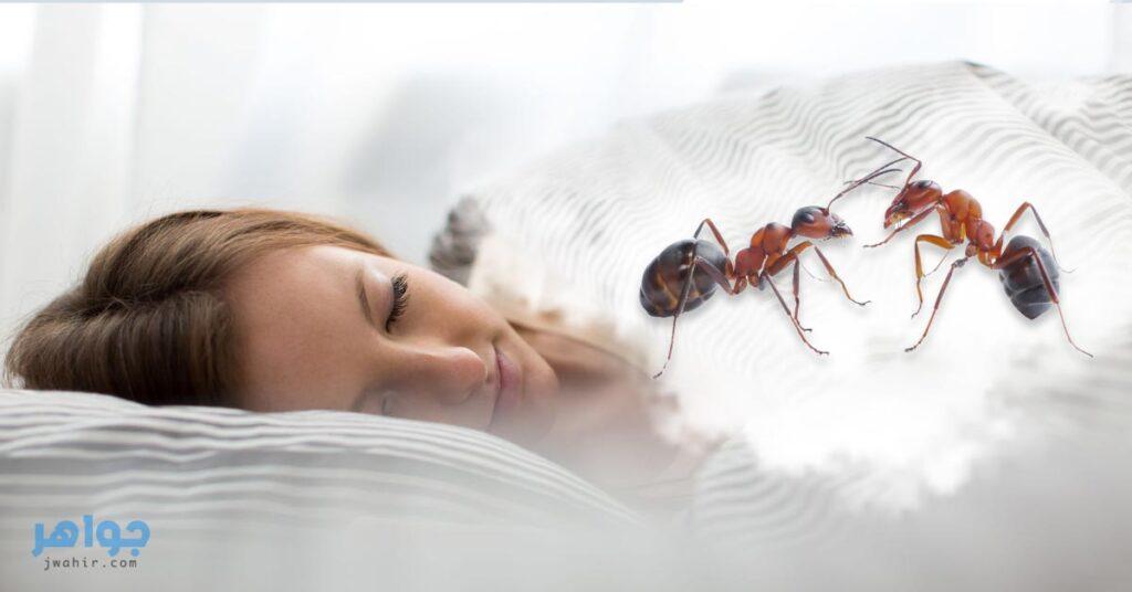 تفسير حلم النمل تفسير رؤية النمل جواهر