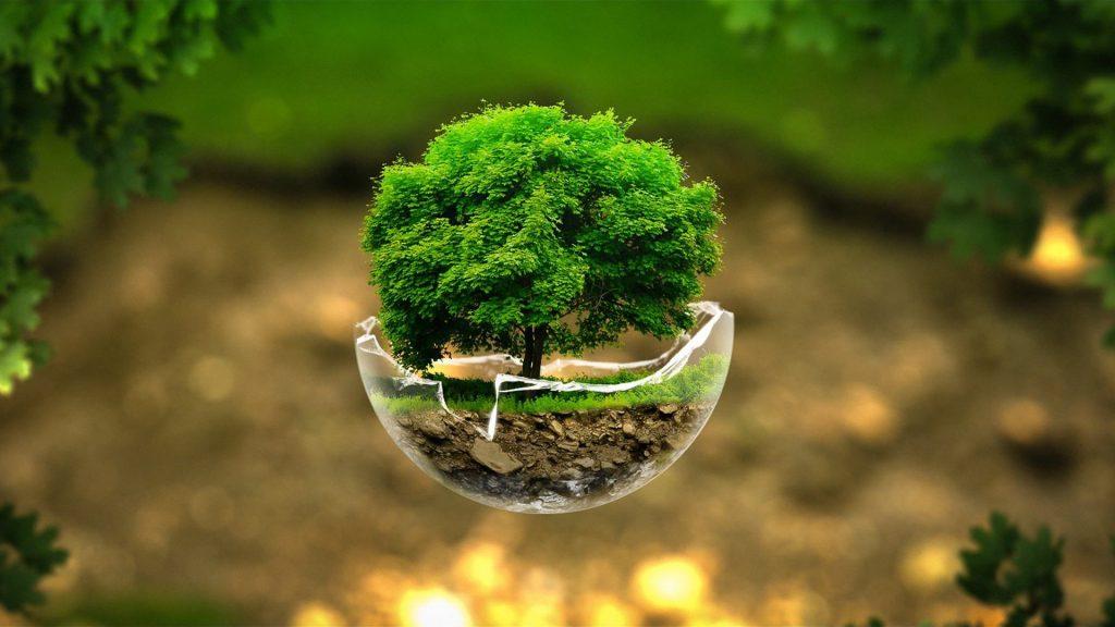 صور طبيعية للفيس شجرة